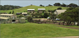 Ace Hi Riding Ranch - Great Ocean Road Tourism
