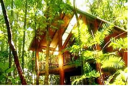 The Canopy Treehouses