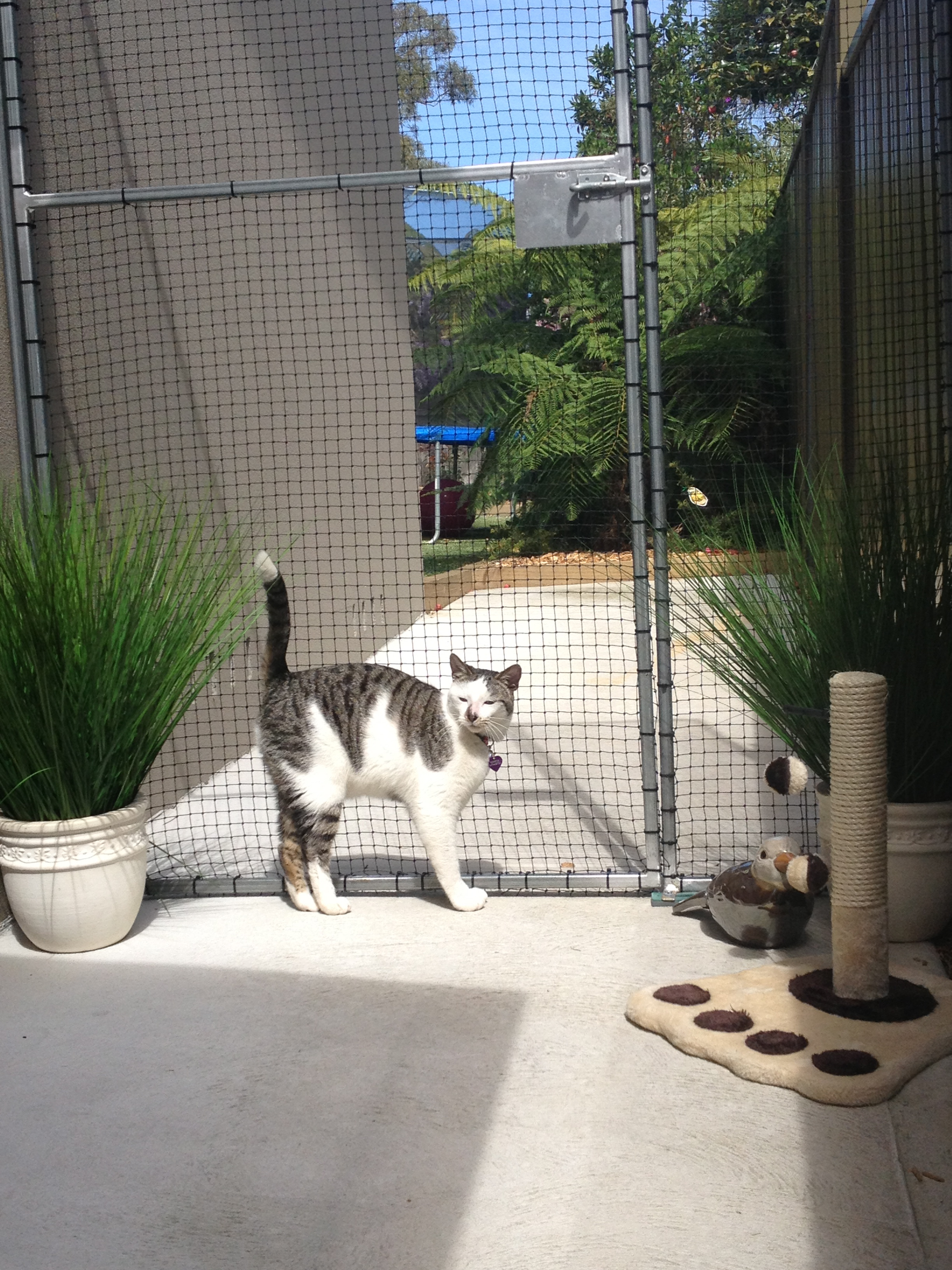 Caringbah Cat Hotel - Great Ocean Road Tourism