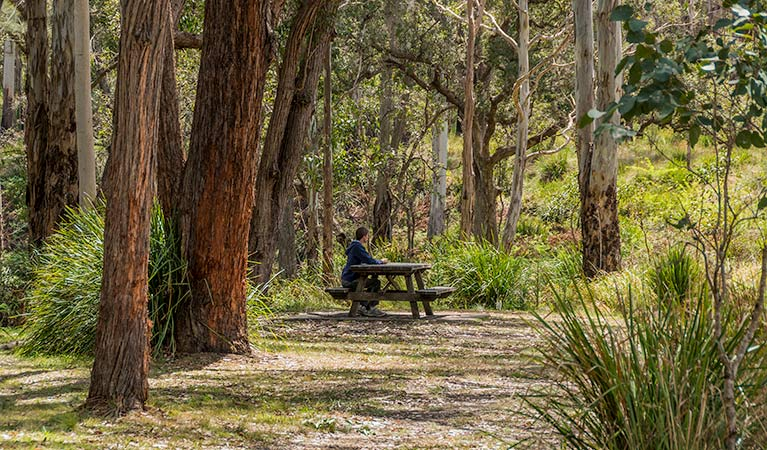 Koreelah Creek campground - Great Ocean Road Tourism