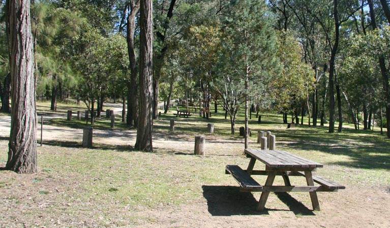 Lemon Tree Flat campground - Great Ocean Road Tourism