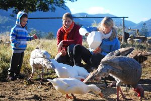 Cedar Glen Farmstay - Great Ocean Road Tourism