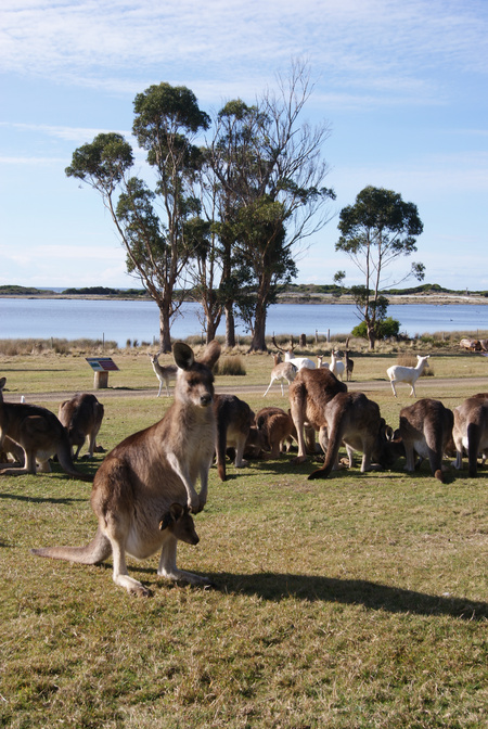East Coast Natureworld - Great Ocean Road Tourism
