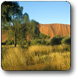 Uluru - Kata Tjuta National Park - Great Ocean Road Tourism