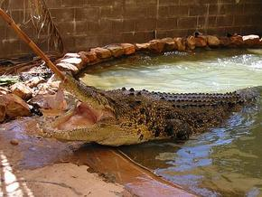 Wyndham Zoological Gardens and Crocodile Park - Great Ocean Road Tourism