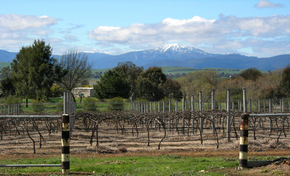 Buller View Wines - Great Ocean Road Tourism