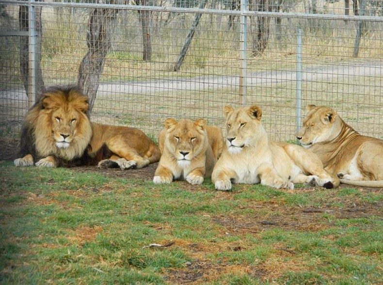 Darling Downs Zoo - Great Ocean Road Tourism