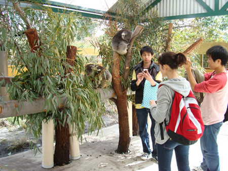 Caversham Wildlife Park - Great Ocean Road Tourism