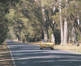 Ludlow Tuart Forest - Great Ocean Road Tourism