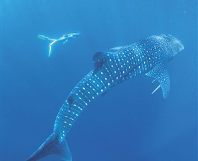 Ningaloo Marine Park - Great Ocean Road Tourism