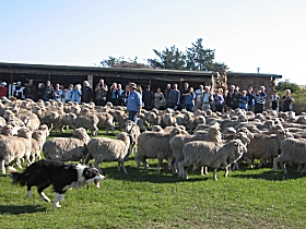 Curringa Farm - Accommodation and Farm Tours - Great Ocean Road Tourism
