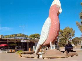 The Big Galah - Great Ocean Road Tourism