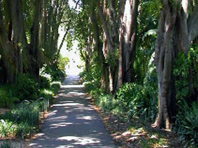 Adelaide Botanic Garden - Great Ocean Road Tourism