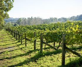 Surveyor's Hill Vineyards - Great Ocean Road Tourism
