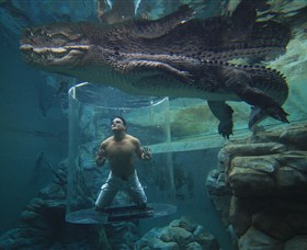 Crocosaurus Cove - Great Ocean Road Tourism