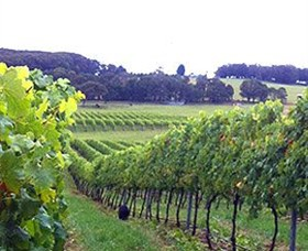 Banjo's Run Winery and Vineyard - Great Ocean Road Tourism
