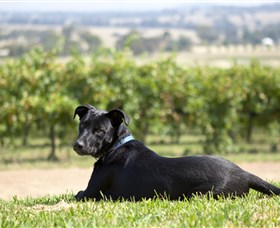 Moothi Estate Vineyard and Cellar Door - Great Ocean Road Tourism