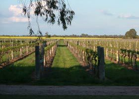 Water Wheel Vineyards - Great Ocean Road Tourism