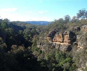 Ferntree Gully Reserve - Great Ocean Road Tourism