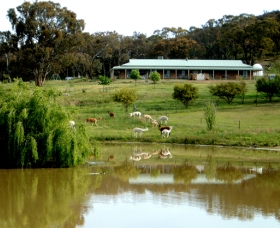 Clearview Alpacas - Great Ocean Road Tourism