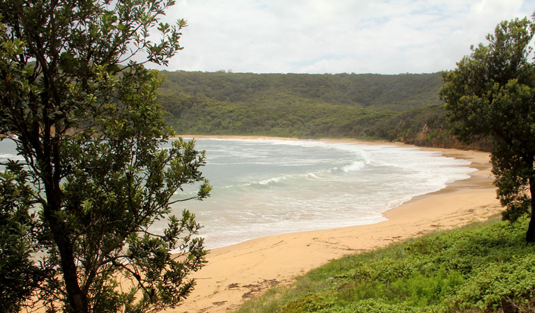 Maitland Bay track - Great Ocean Road Tourism
