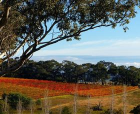 Bloodwood Estate - Great Ocean Road Tourism