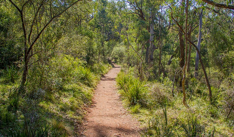 Mares Forest Creek walking track - Great Ocean Road Tourism