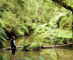 Morwell National Park - Great Ocean Road Tourism