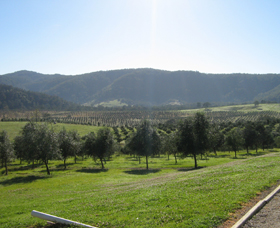 Hastings Valley Olives - Great Ocean Road Tourism