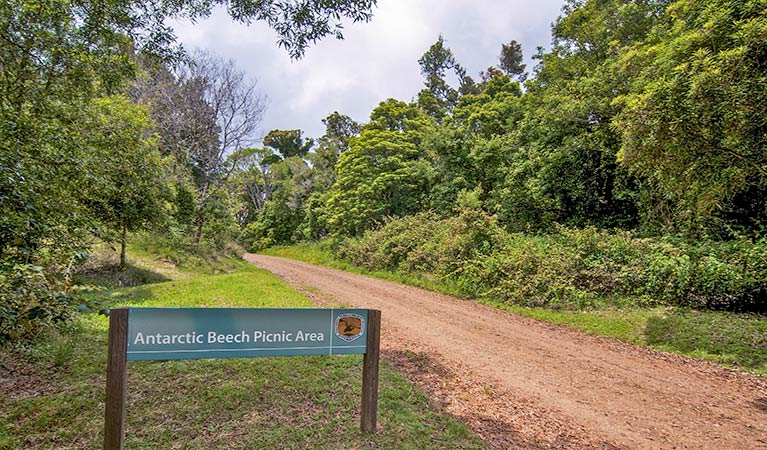 Antarctic Beech picnic area - Great Ocean Road Tourism