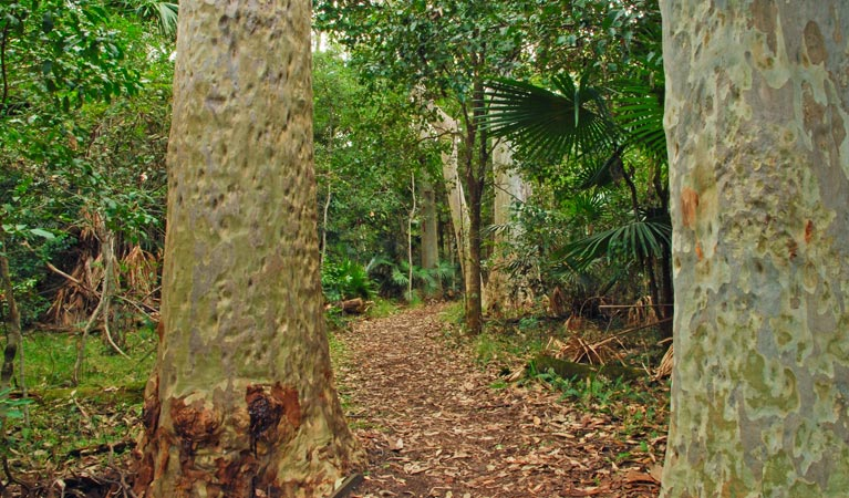 Depot Beach Rainforest walk