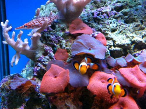 Tropical Marine Centre - Great Ocean Road Tourism