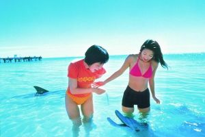 Monkey Mia Dolphins  Shark Bay Air Tour From Perth - Great Ocean Road Tourism