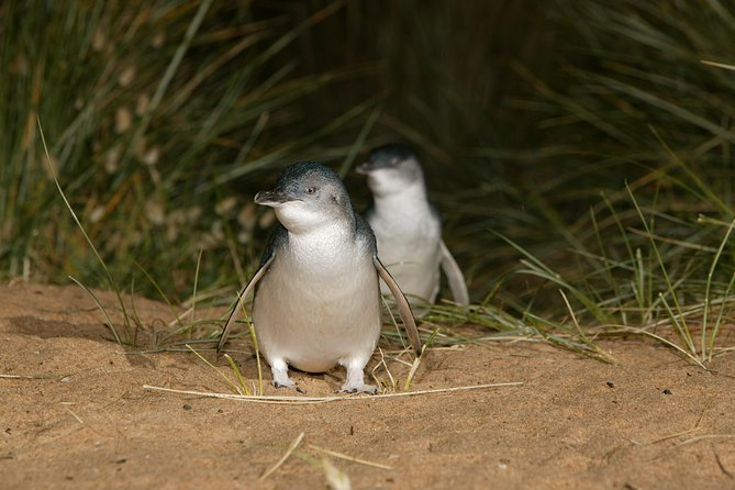 Full-Day Penguin Parade and Melbourne City Tour From Melbourne - Great Ocean Road Tourism
