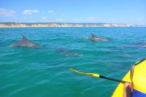 Half-Day Kayak with Dolphins and 4WD Beach Drive from Rainbow Beach - Great Ocean Road Tourism