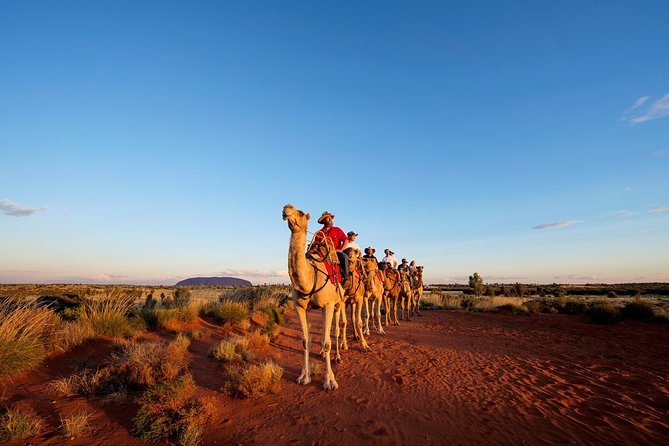 Uluru Camel Express Sunrise or Sunset Tours - Great Ocean Road Tourism