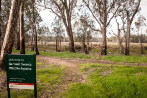 Gemmill Swamp Wildlife Reserve - Great Ocean Road Tourism