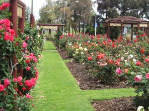 Cowra Rose Garden - Great Ocean Road Tourism