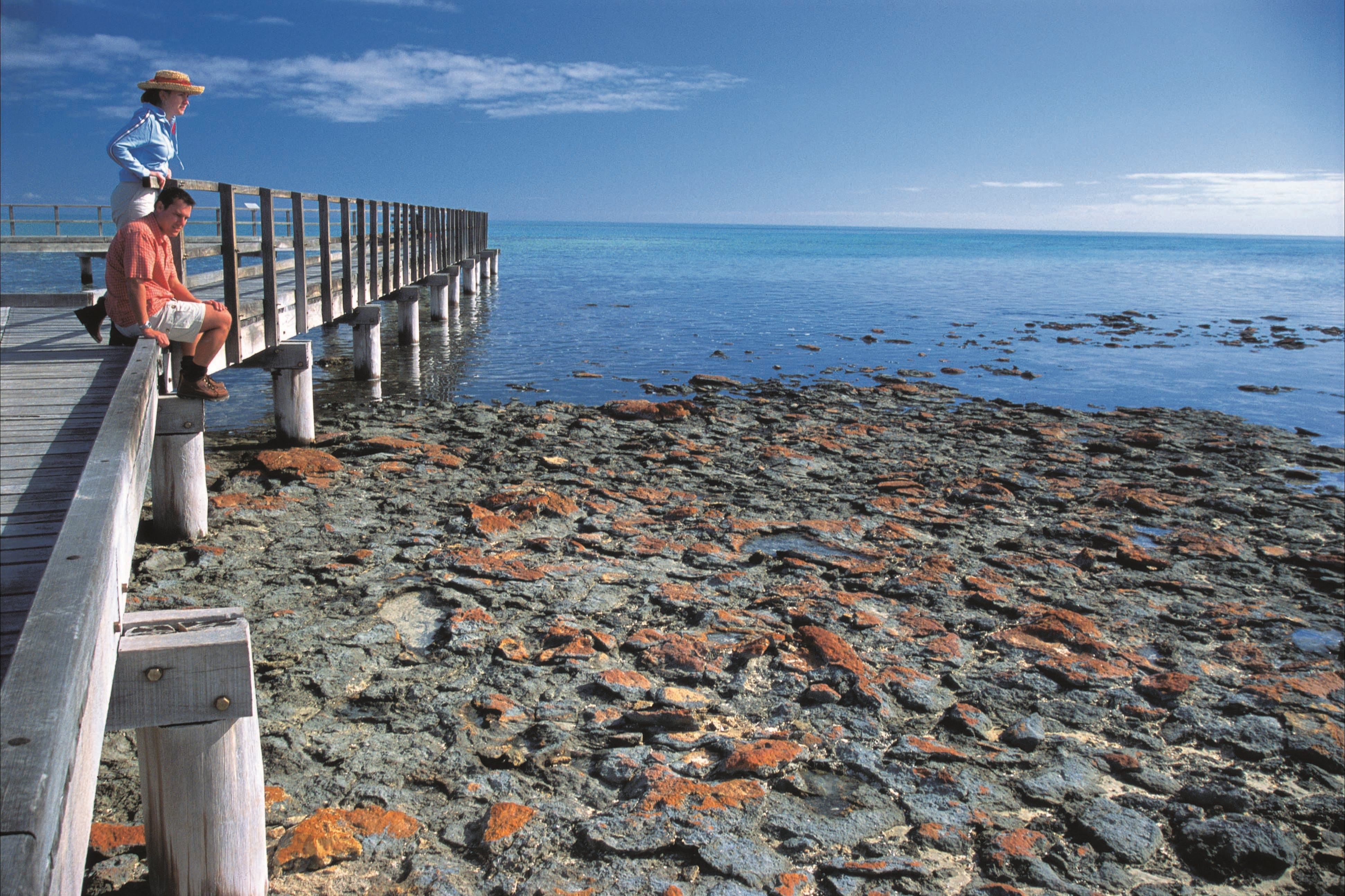 Hamelin Pool Stromatolites - Great Ocean Road Tourism