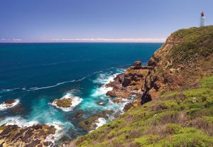 Bushrangers Bay Walking Track - Great Ocean Road Tourism