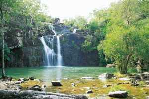 Cedar Creek Falls - Great Ocean Road Tourism