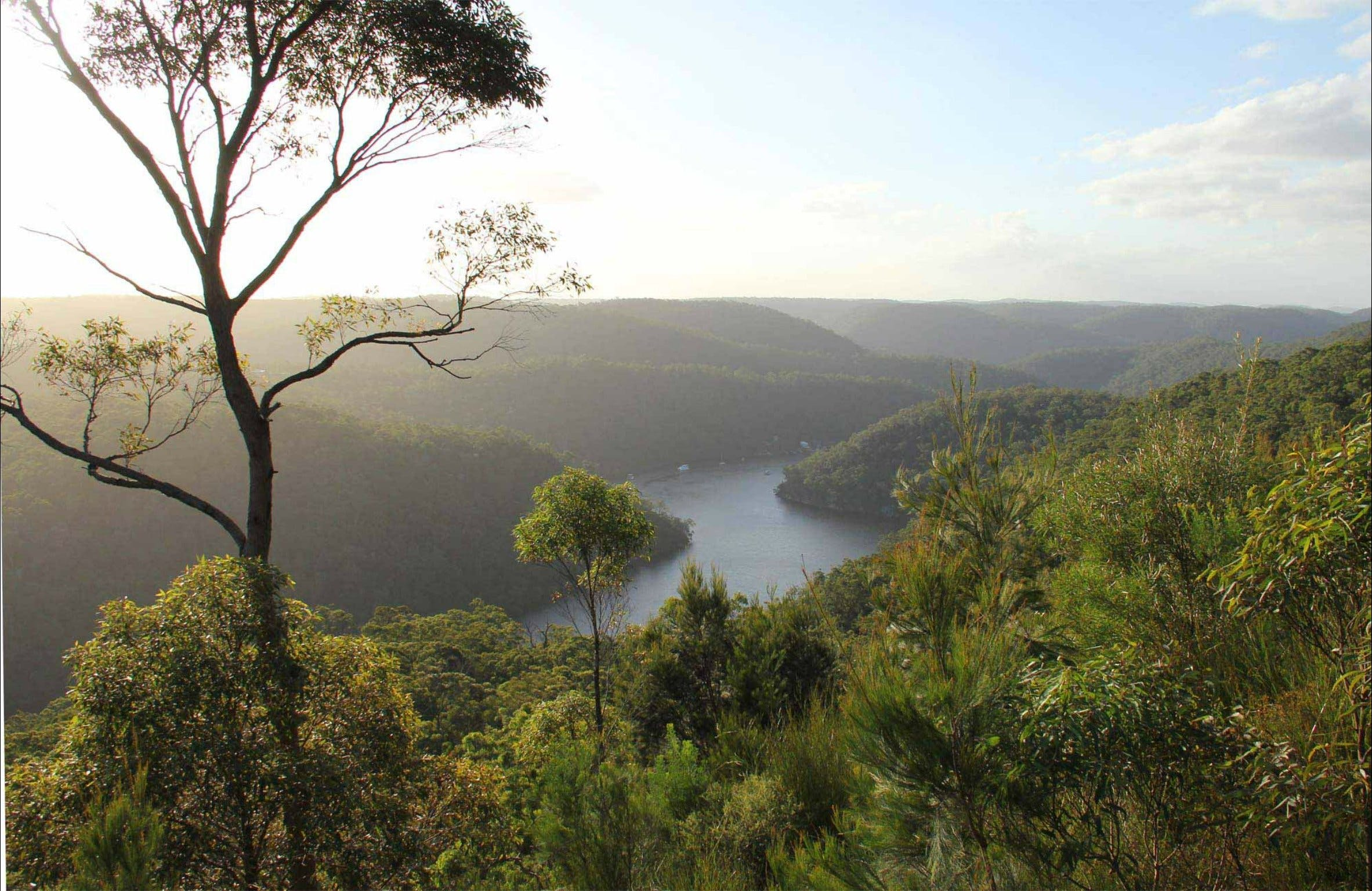 Great North walk - Berowra Valley National Park - Great Ocean Road Tourism