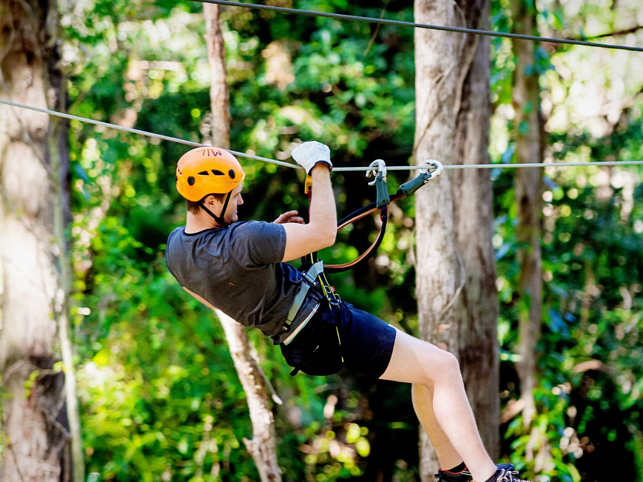 TreeTop Challenge Currumbin Wildlife Sanctuary - Great Ocean Road Tourism