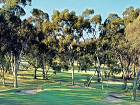Tanunda Pines Golf Club - Great Ocean Road Tourism