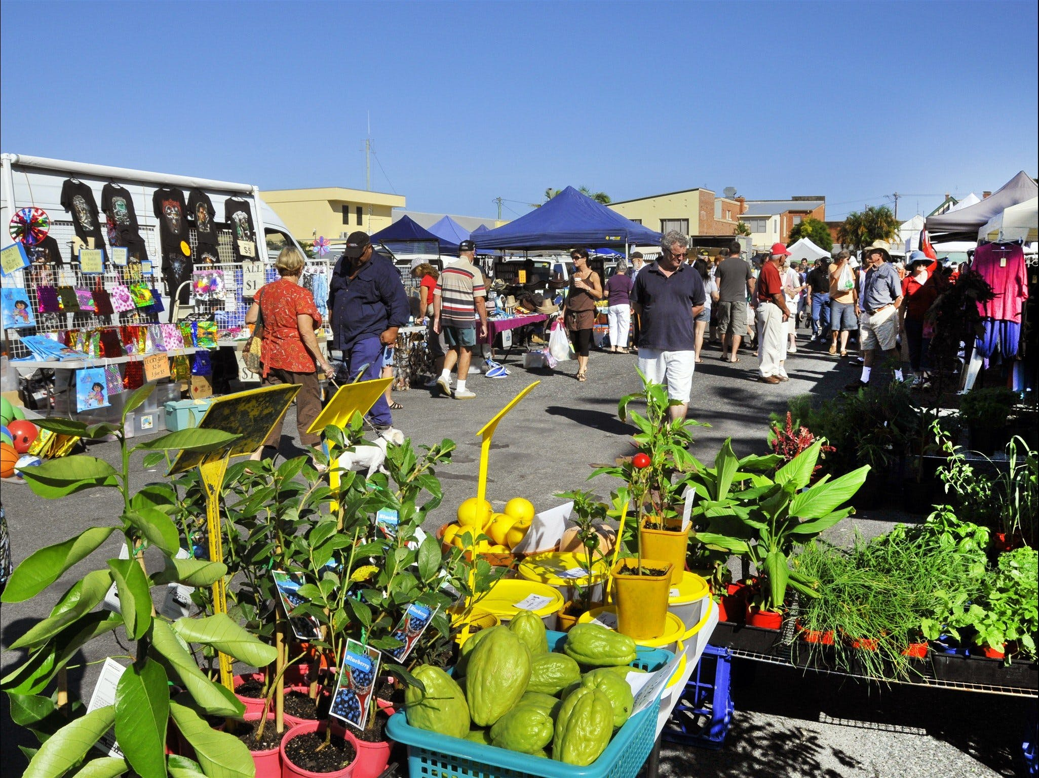 Maclean Community Monthly Markets - Great Ocean Road Tourism