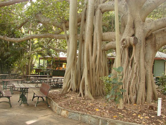Gardens Tearooms - Great Ocean Road Tourism